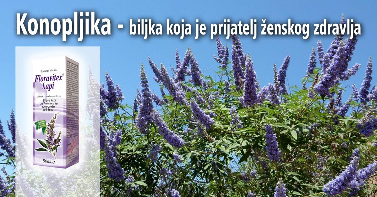 Konopljika - biljka koja je prijatelj ženskog zdravlja